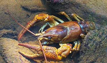 Hike along the Crayfish Trail